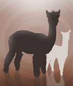 Photo of Female spinner's dream/companion alpaca package