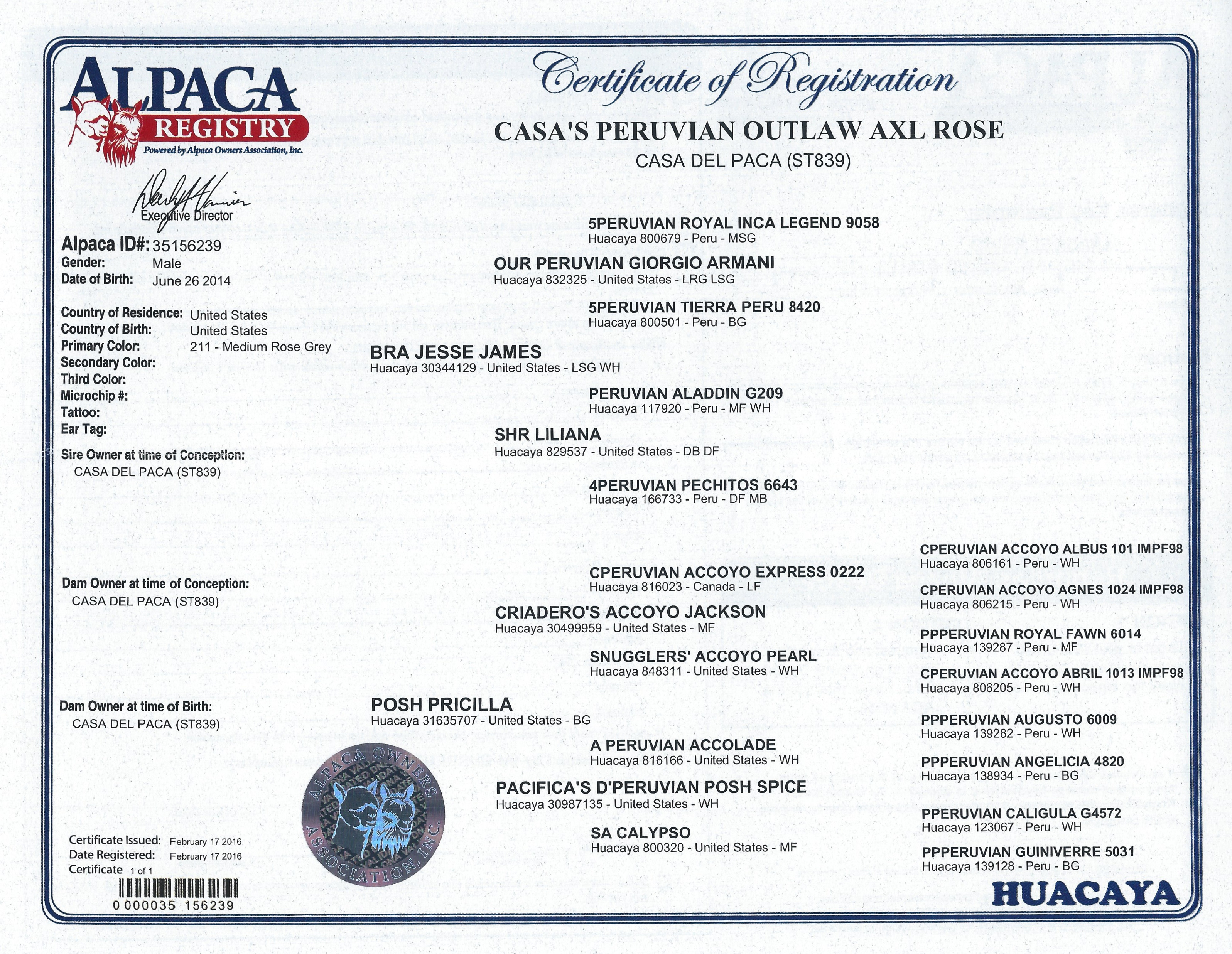 Alpacas for sale casas peruvian outlaw axl rose huacaya male certificate 1betcityfo Image collections