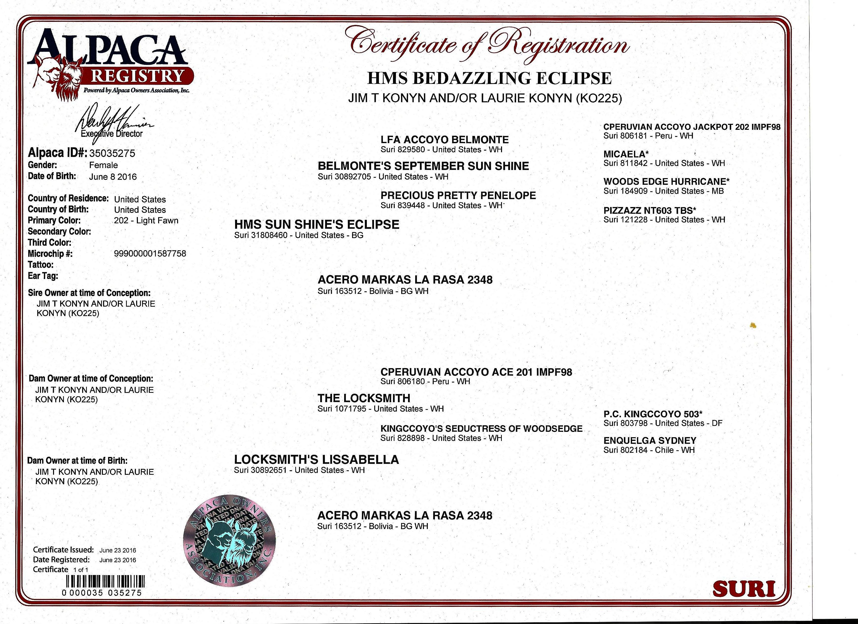 Alpacas for sale hms bedazzling eclipse suri female unproven certificate histogram aiddatafo Gallery
