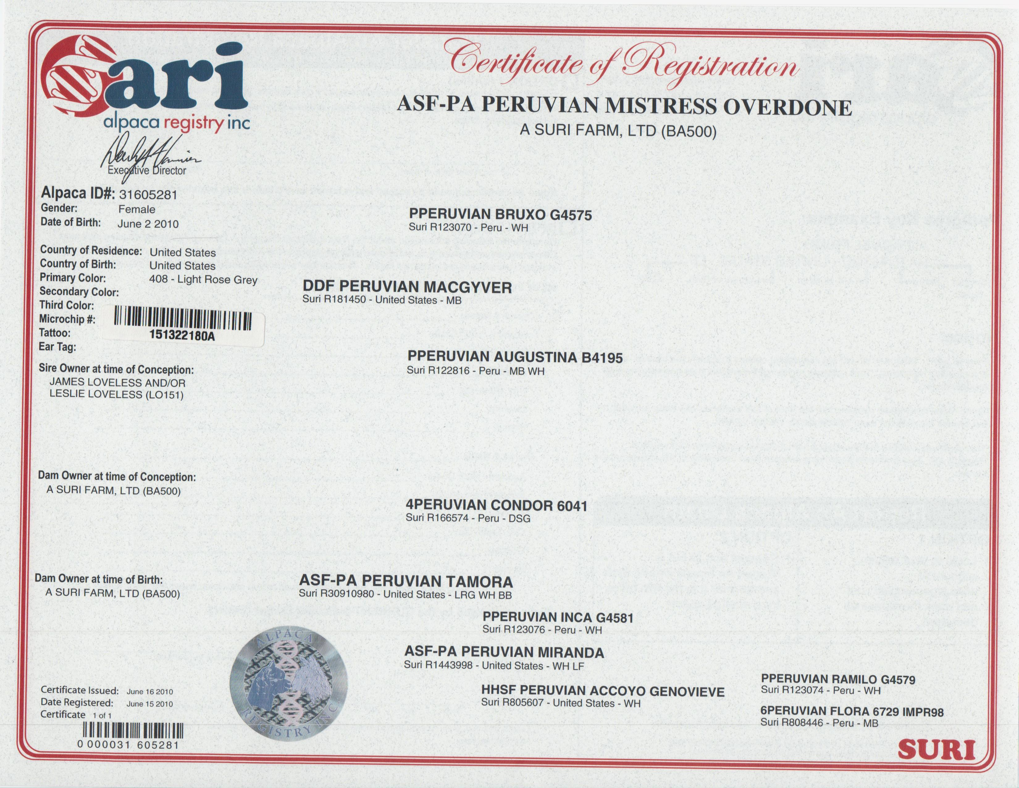 Alpacas for sale asf pa peruvian mistress overdone suri female certificate xflitez Gallery