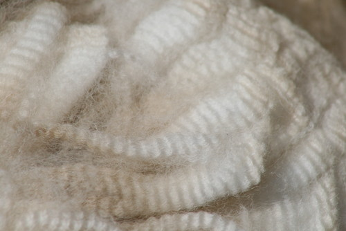 Raw Fiber Harvested via Shearing