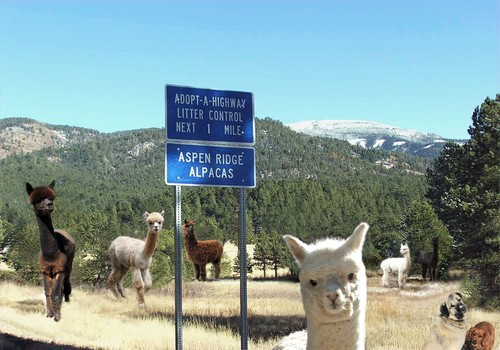 Aspen Ridge Alpacas on the road to southwest adventure!