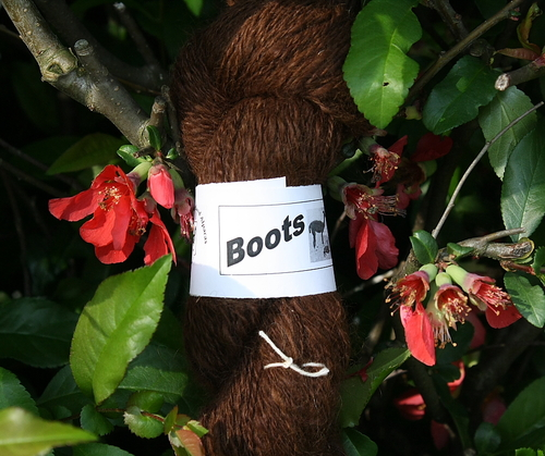 Boots Yarn in the dreaded quince bush