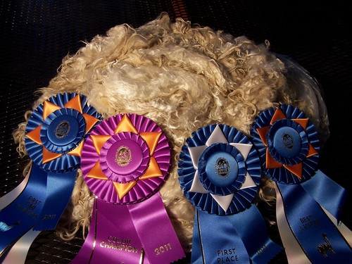 2011-2012 - A beautiful Suri fleece! multiple color champion