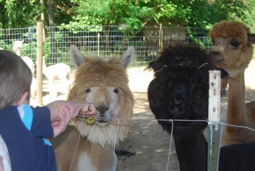 Rosie getting a treat