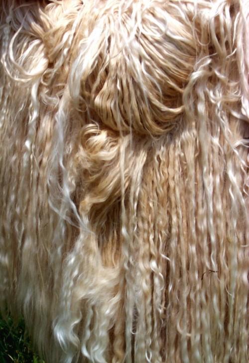 Suri - closest animal fiber to silk