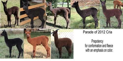 2012 cria through 8-26-2012