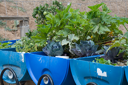 Learn about Aquaponics
