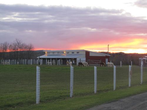 Evening on the farm