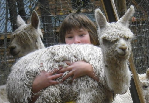 Steelhead Ranch Alpacas Chapter 4 Alpaca Values