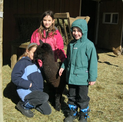 These kids adopted three alpacas