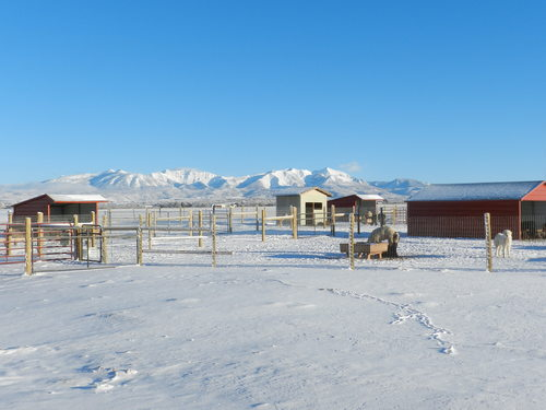 Winter on the ranch!