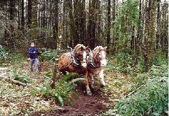 Clearing with Draft Horses