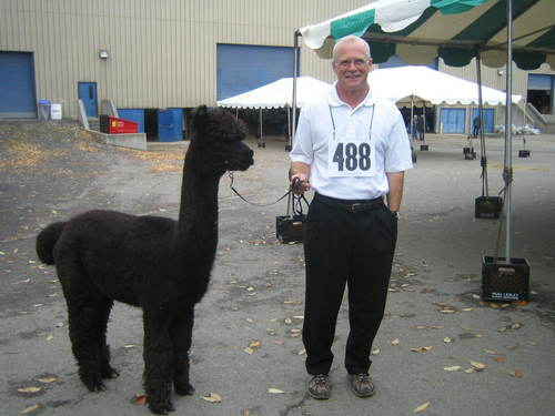 Visit alpaca shows.