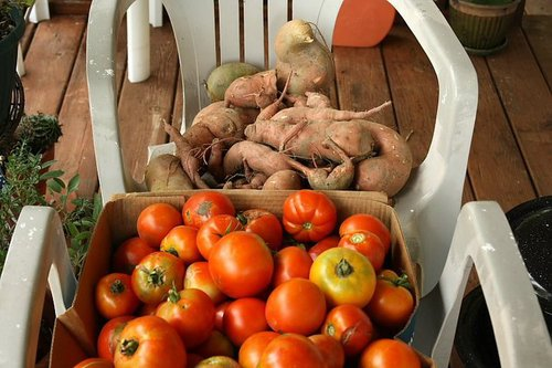 Tomatoes & Sweep Potatoes from a couple of years ago.