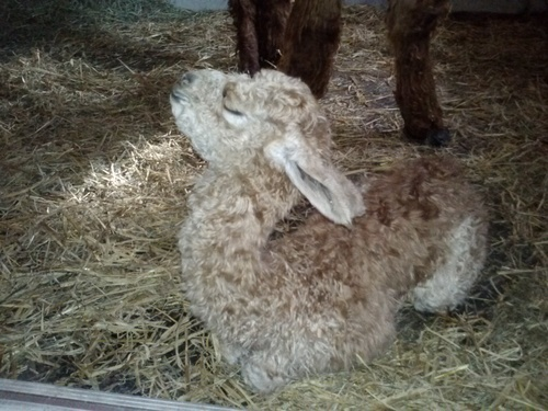 Allante just born