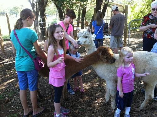 National Alpaca Farm Days in California