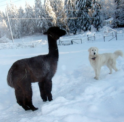 Pedro and our dog Snowy. Snowy is a Maremma