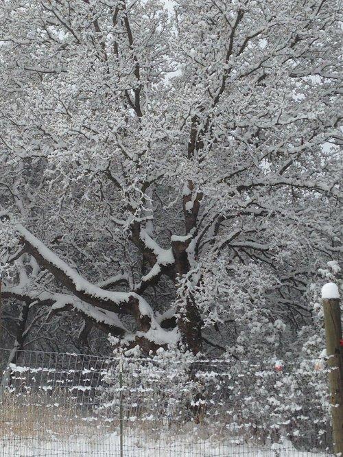 12-6-13 Snow in Redding