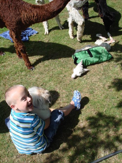 Zack's first alpaca birth!