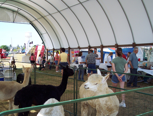 Alpacas & products on display to the public
