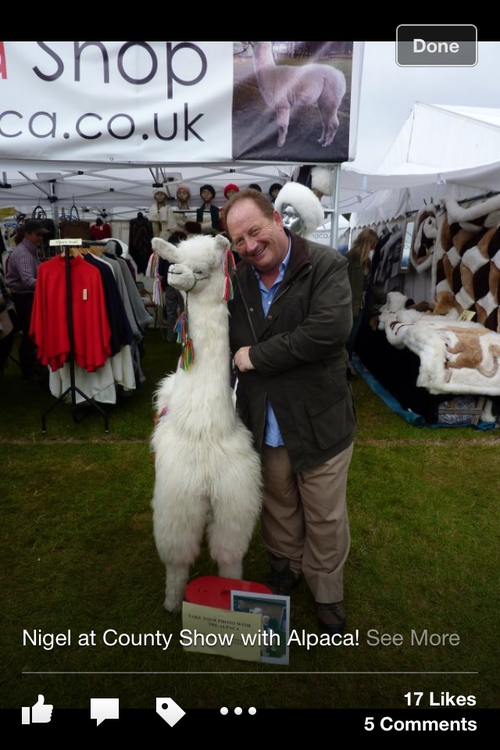 Conman Nigel Goldman frolics with an alpaca while on the run