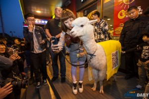 Man, alpaca enjoy joyride in Jilin
