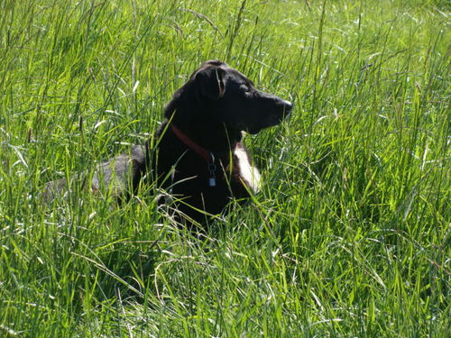 Bonnie loves the tall green grass