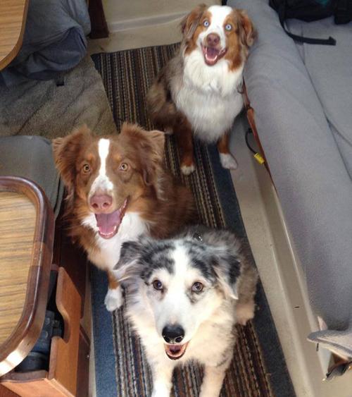 Foster, Ellie, & Charlie