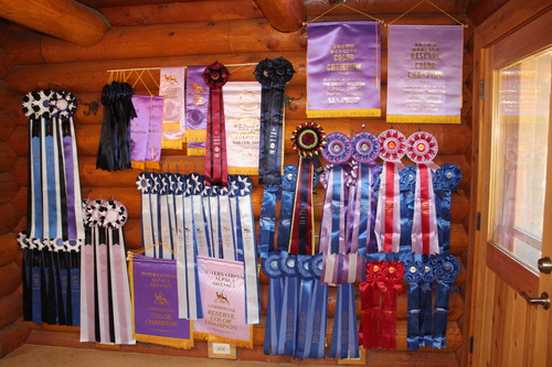 TOP HONORS IN 2014 FOR ALPACA COUNTRY ESTATES!