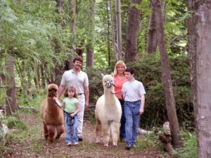 Alpaca farms preparing for national celebration