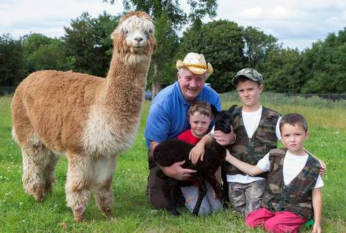 What do you get when you cross a llama and an alpaca?