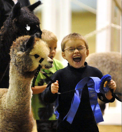 Taking First Place at our annual AlpacaFest show. Alpacas are truly for the whole family!