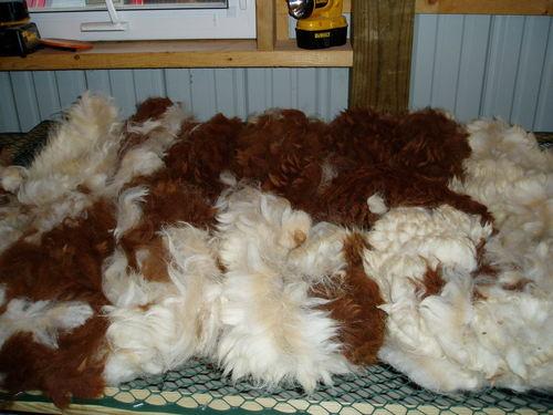 Raw Alpaca Fleece