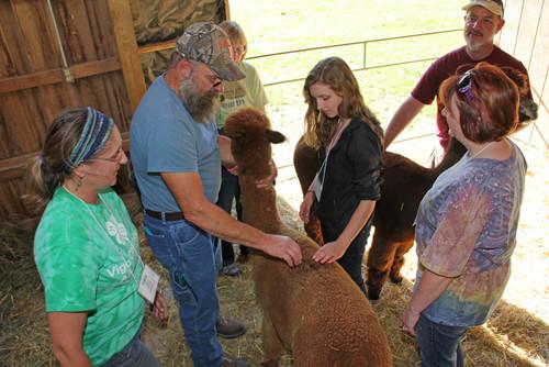 Alpaca 101: Fundamentals of Alpaca Husbandry