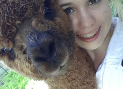 Amber and her awesome alpacas