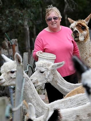 Alpaca Picnic to take over Hobart's Parliament Lawns