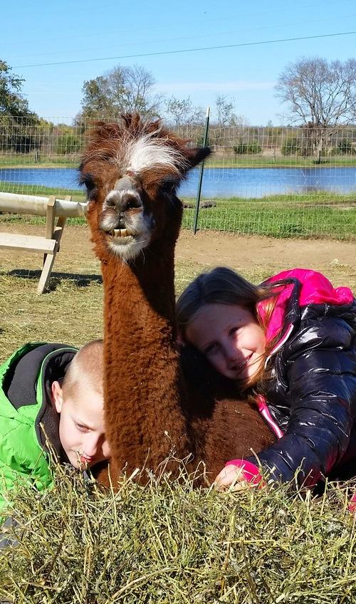My grandkids lovin on Gieselle the alpaca!