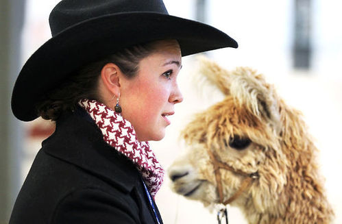 Over 600 alpacas from across U.S. at national show, auction in Grand Island
