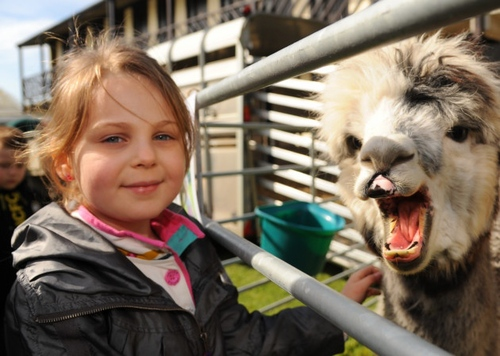 What to expect from this year's Spring Fling at the Norfolk Showground