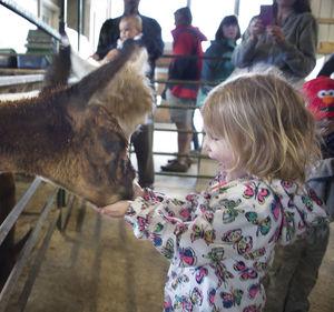 Farm celebrates baby alpacas at annual event