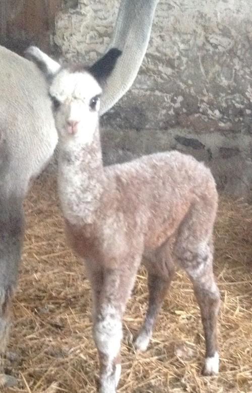 MRG Female born 5-15