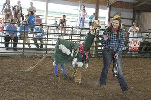 Robinson wins 8th supreme honor in llamas