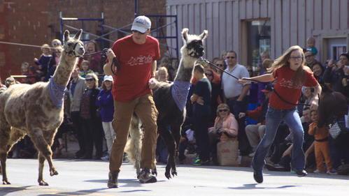 19th annual Running of the Llamas Sept. 12