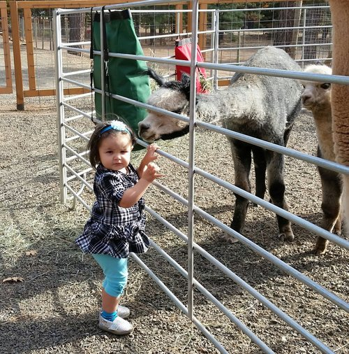 Miss Bea checks out small farm visitor