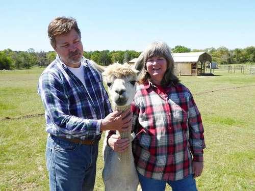 Rural Bastrop County ranch features alpacas