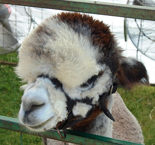 Alpacas. Dreams. Homegrown. Reality. Small Business Support. Teamwork. Inspiration.