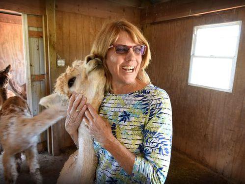 Lebanon County farmers enjoy their alpacas