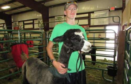 Brause is Senior Showman and Grand Champion of Alpaca Show