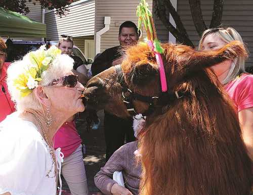 Kissed by a llama: Woodburn retirement facility connects residents with therapy llama